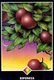 ripeness - Reife